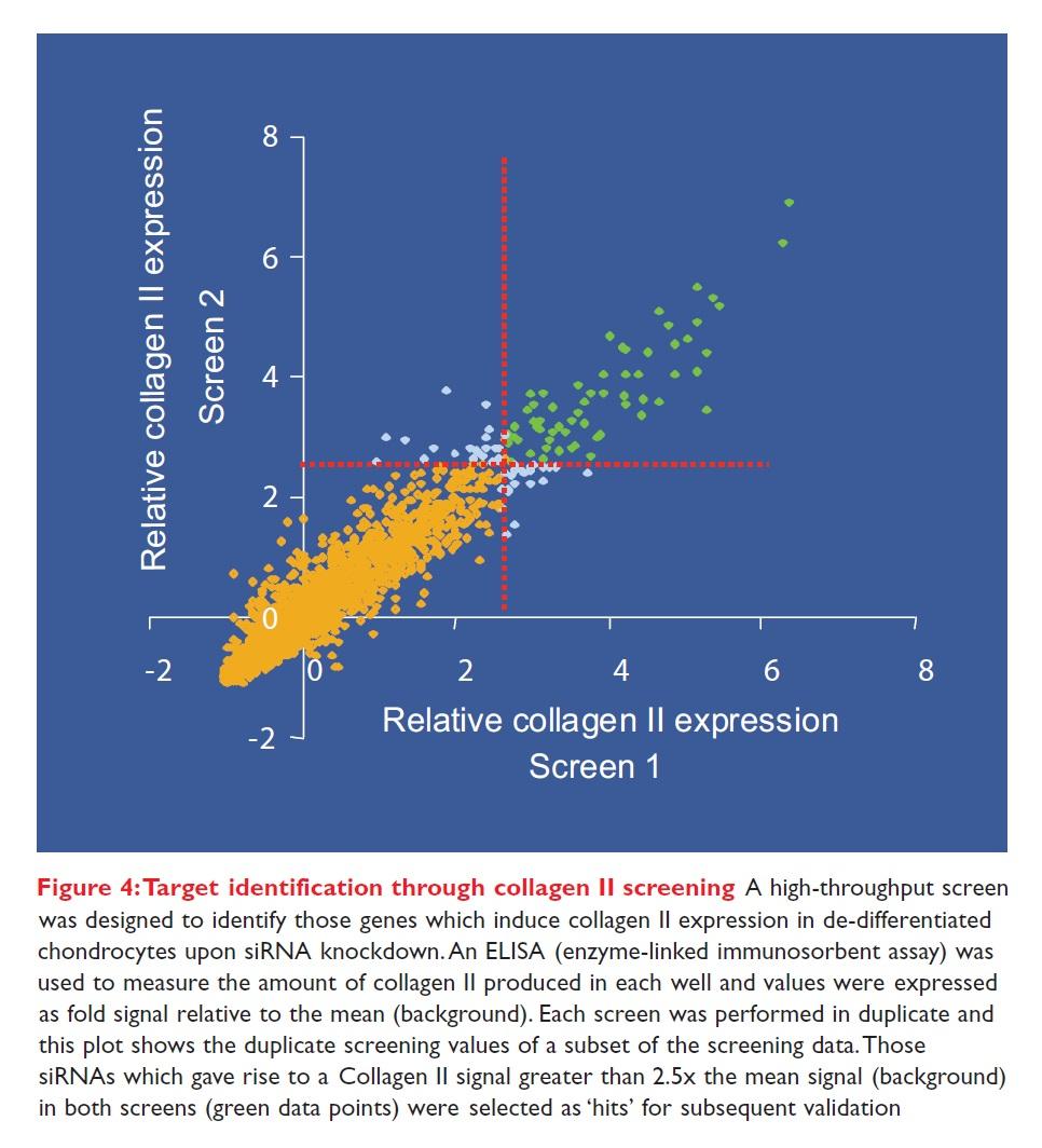 Figure 4 Target identification through collagen II screening