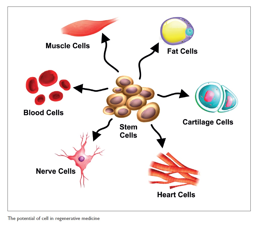 Figure 1 The potential of cell in regenerative medicine