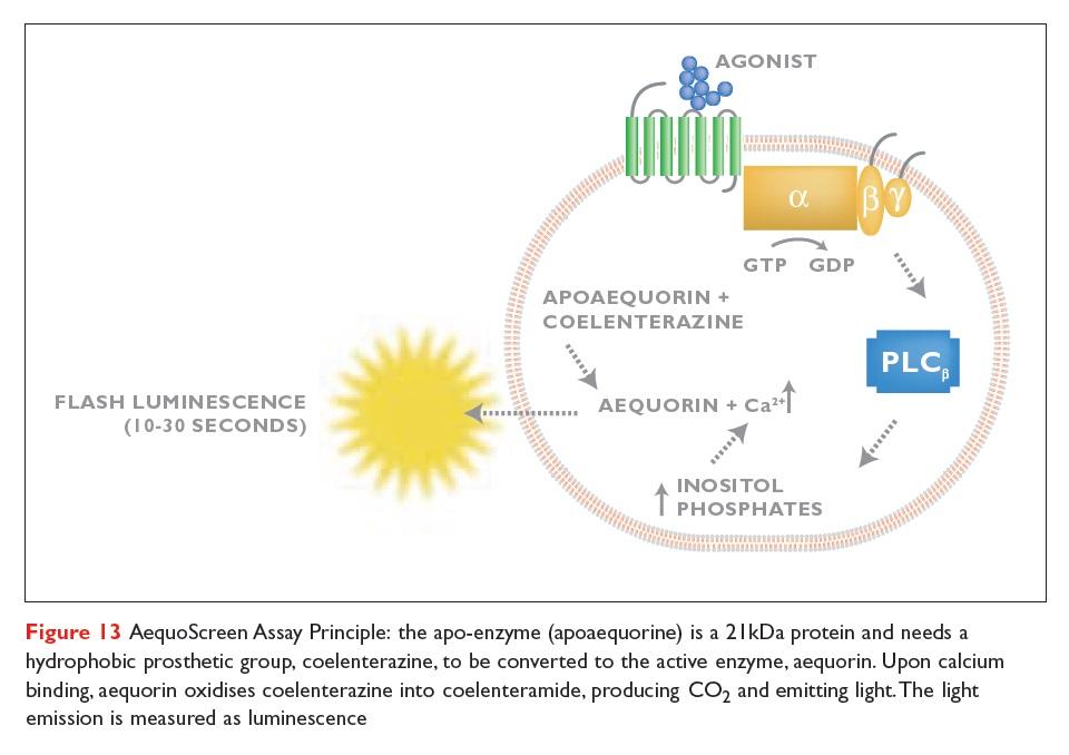 Figure 13 AequoScreen Assay Principle, the apo-enzyme (apoaequorine)