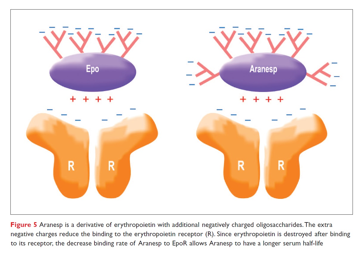 Figure 5 Aranesp is a derivative of erythropoietin with additional negatively charges oligosaccharides
