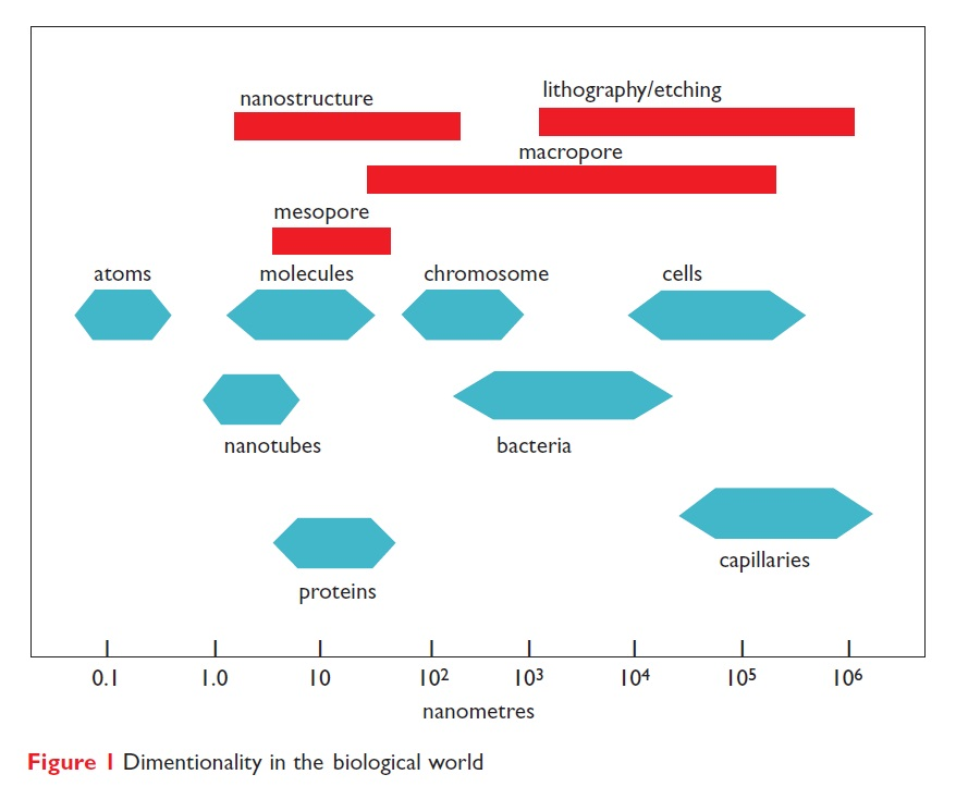 Figure 1 Dimentionality in the biological world