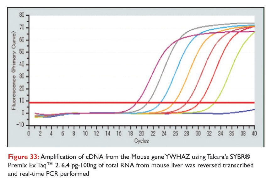 Figure 33 Amplification of cDNA from the Mouse gene YWHAZ using Takara's SYBR Premix Ex Taq 2. 6.4 pg-100ng of total RNA fom mouse liver