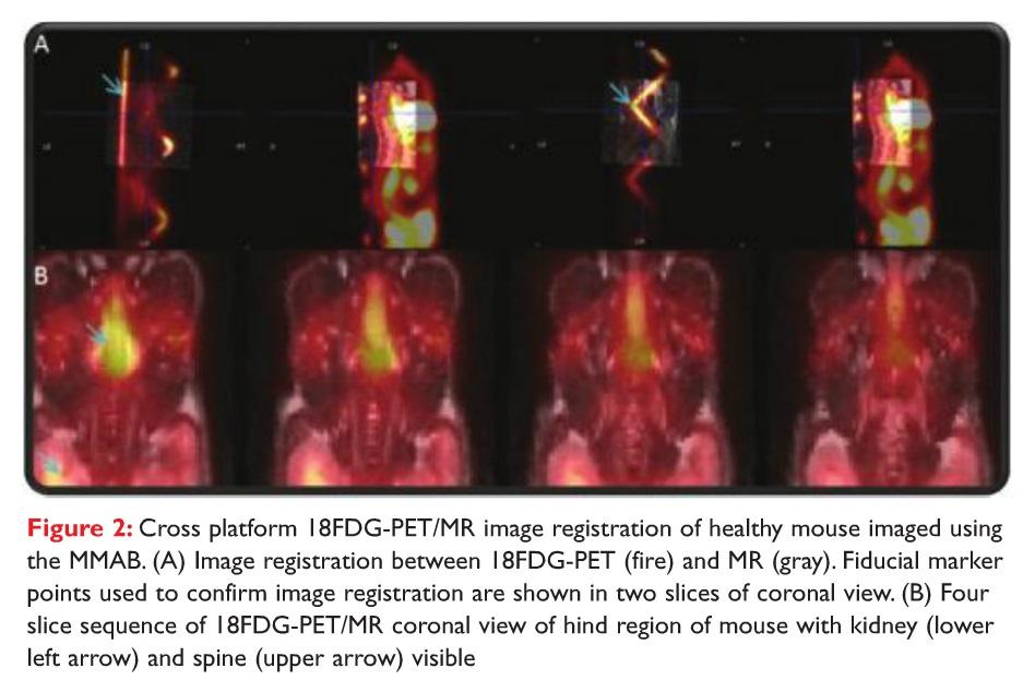 Figure 2 Cross platform 18FDG-PET/MR image registration of healthy mouse imaged using the MMAB