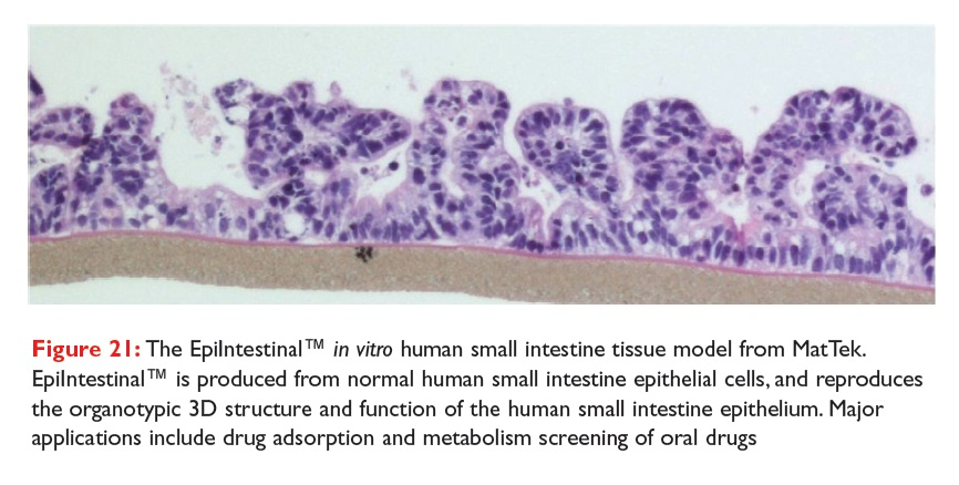 Figure 21 The Epilntestinal in vitro human small intestine tissue model from MatTek
