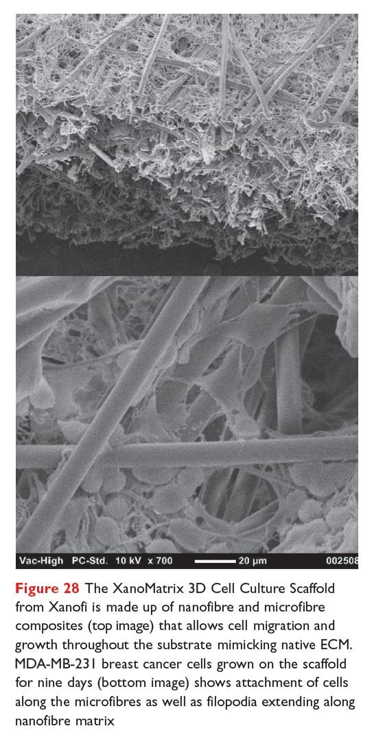 Figure 28 The XanoMatrix 3D Cell Culture Scaffold from Xanofi