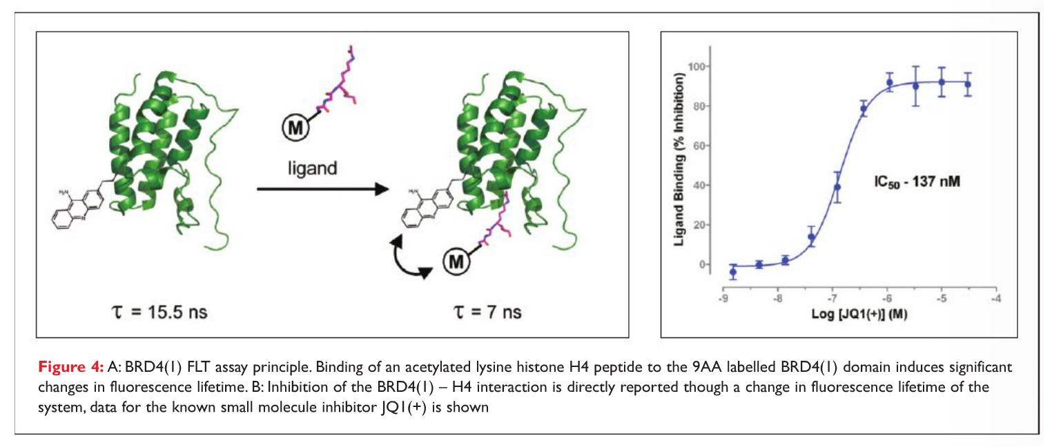 Figure 4 BRD4 FLT assay principle. Binding of an acetylated lysine histone H4 peptide to a 9AA labelled BRD4 domain
