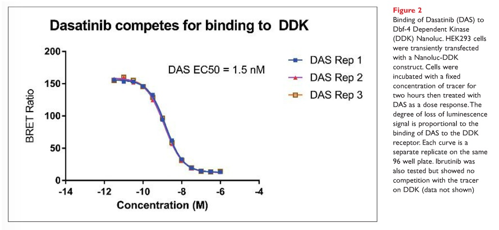 Figure 2 Binding of Dasatinib (DAS) to Dbf-4 Dependent Kinase (DDK) Nanoluc