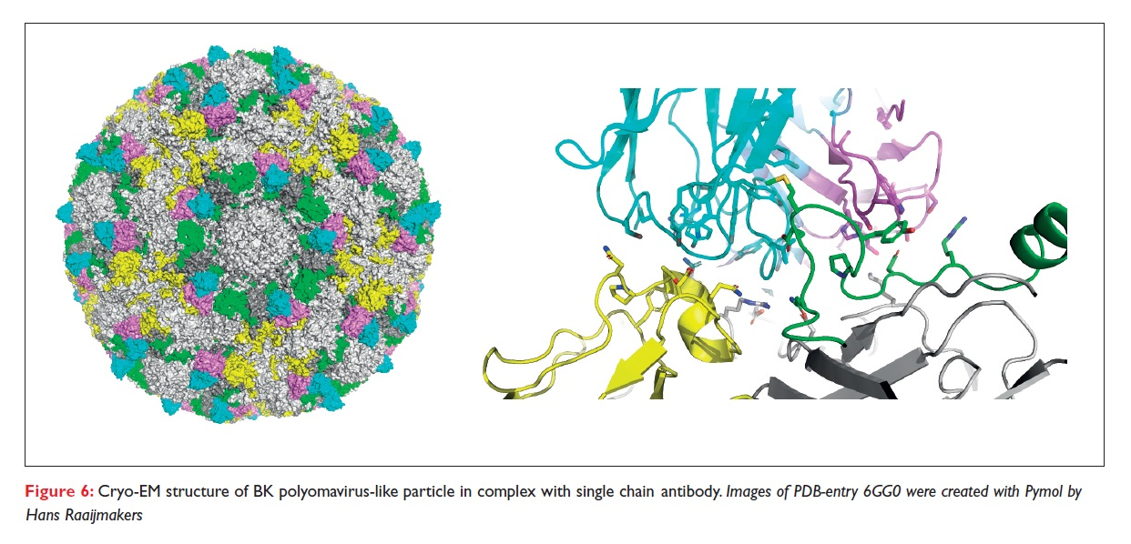 Figure 6 Cryo-EM structure of BK polyomavirus-like particle in complex