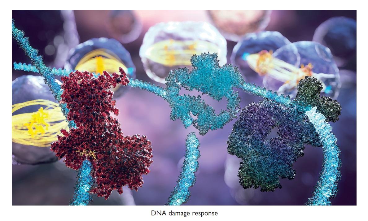 Figure 1 DNA damage response
