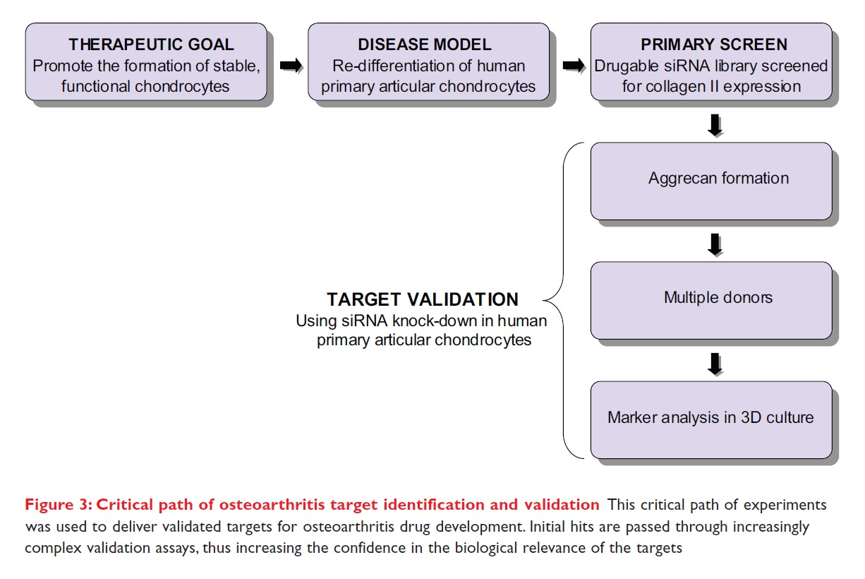 Figure 3 Critical path of osteoarthritis target identification and validation