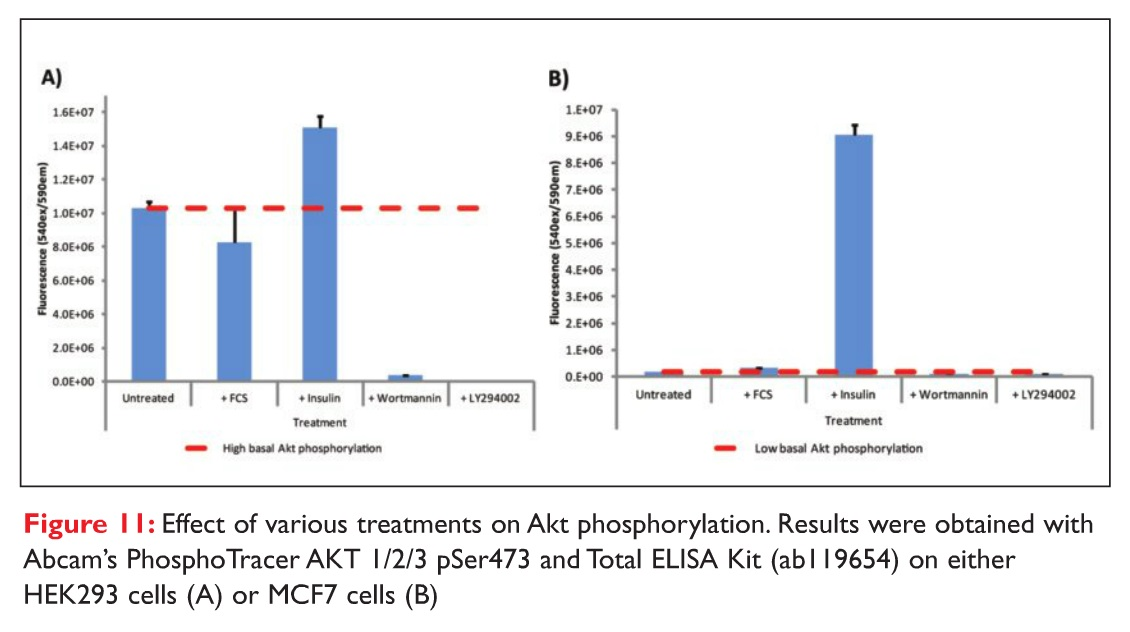 Figure 11 Effect of various treatments on Akt phosphorylation