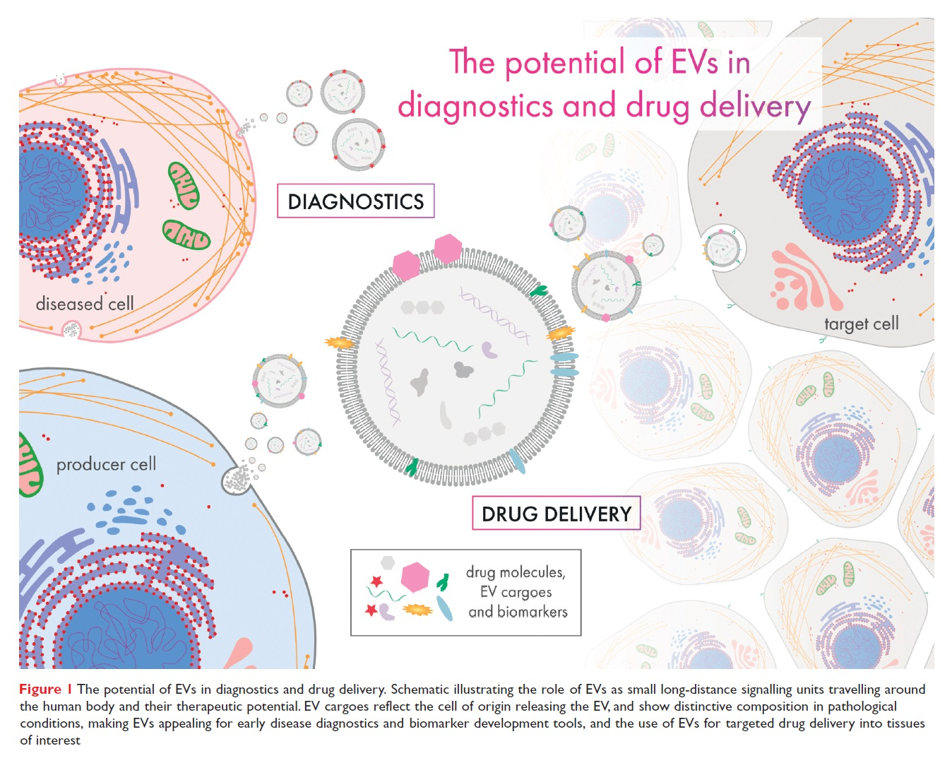Figure 1 The potential of EVs in diagnostics and drug delivery