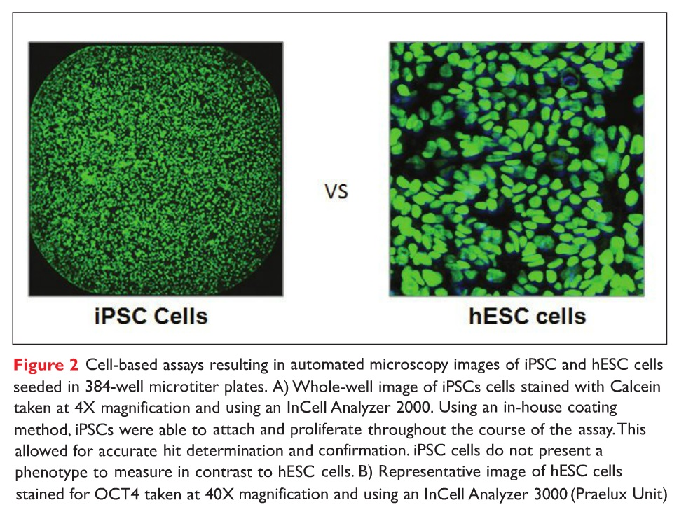 Figure 2 Cell-based assays resulting in automated microscopy images of iPSC and hESC cells seeded in 384-well microtiter plates