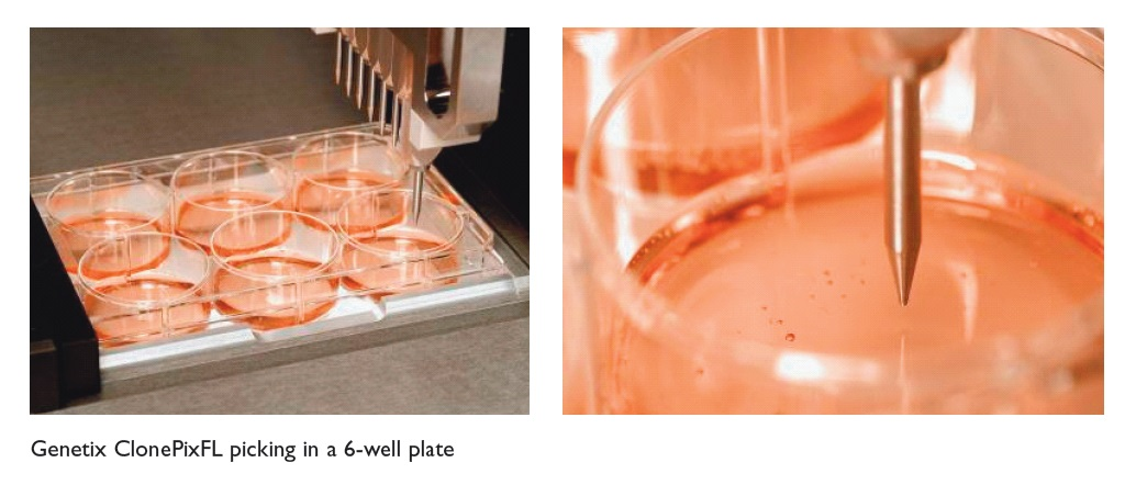 Image 14 Genetix ClonePixFL picking in a 6-well plate