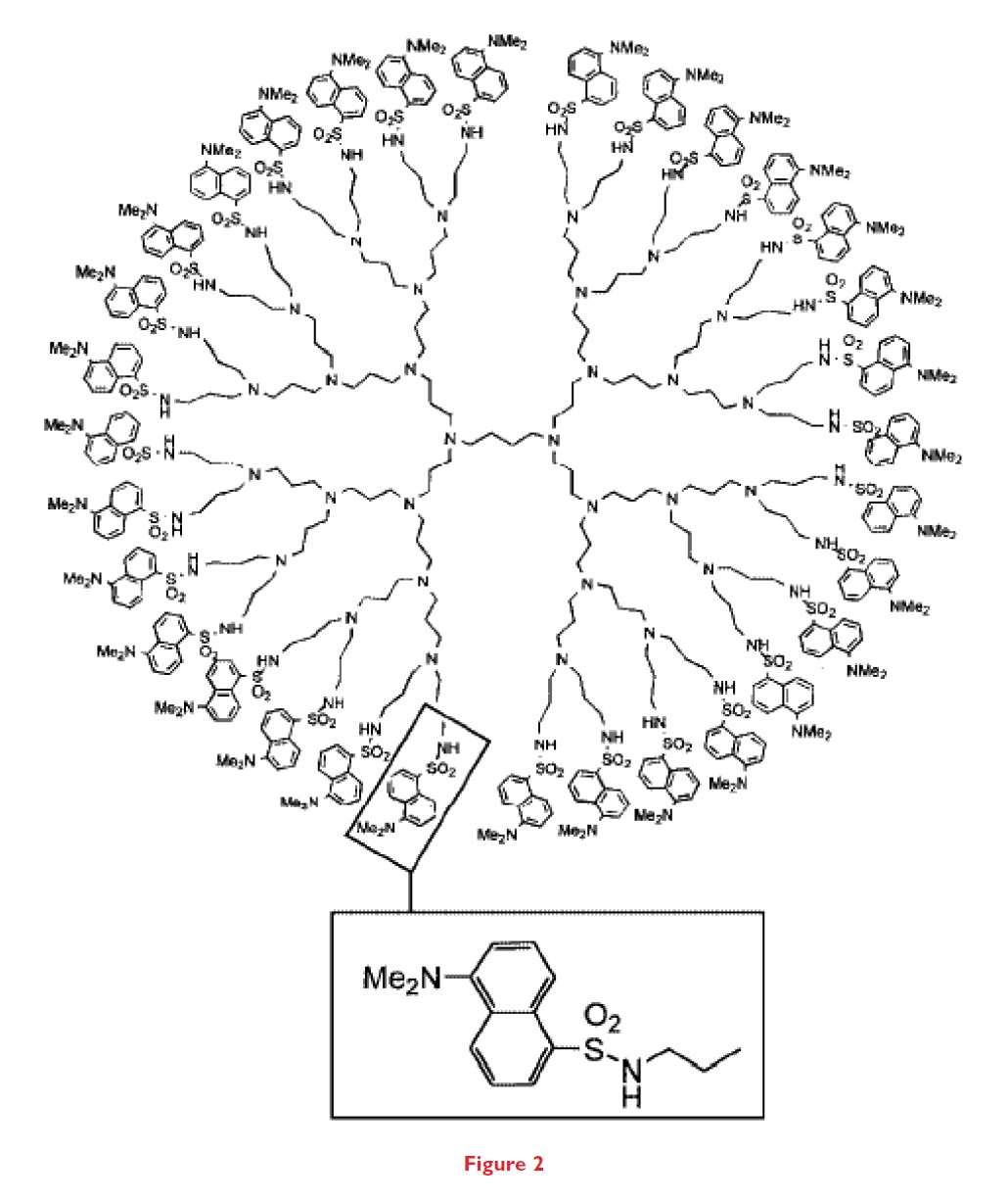 Figure 2 Polymers are synthesised as monodisperse rod-shaped or spherical structures ranging from 1 to 20nm diameter