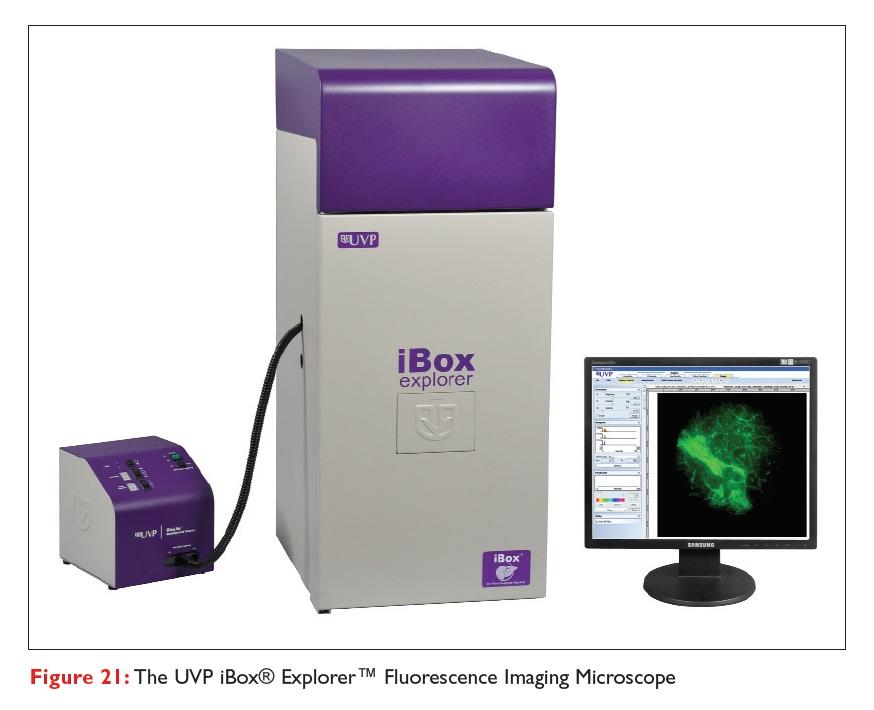 Figure 21 The UVP iBox Explorer Fluorescence Imaging Microscope