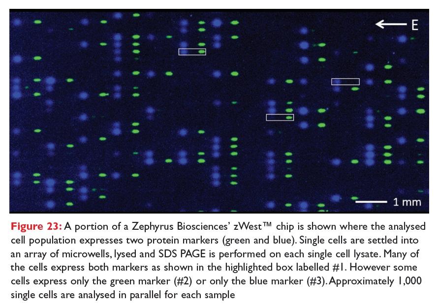 Figure 23 A portion of a Zephyrus Biosciences' xWest chip shown