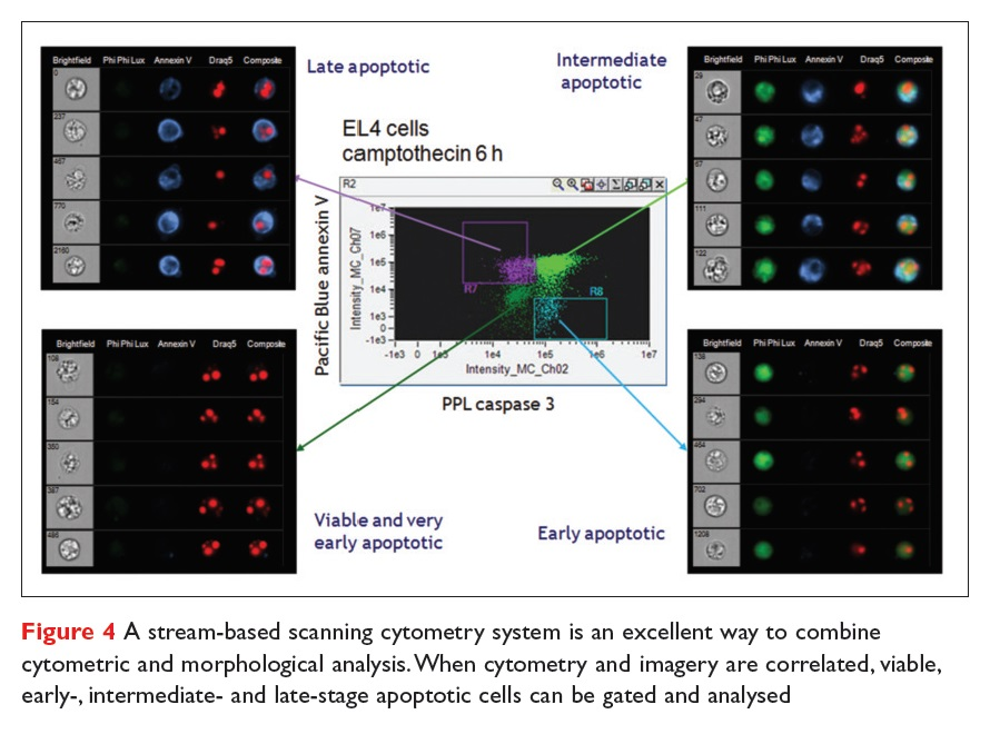 Figure 4 A stream-based scanning cytometry system is an excellent way to combine cytometric and morphological analysis