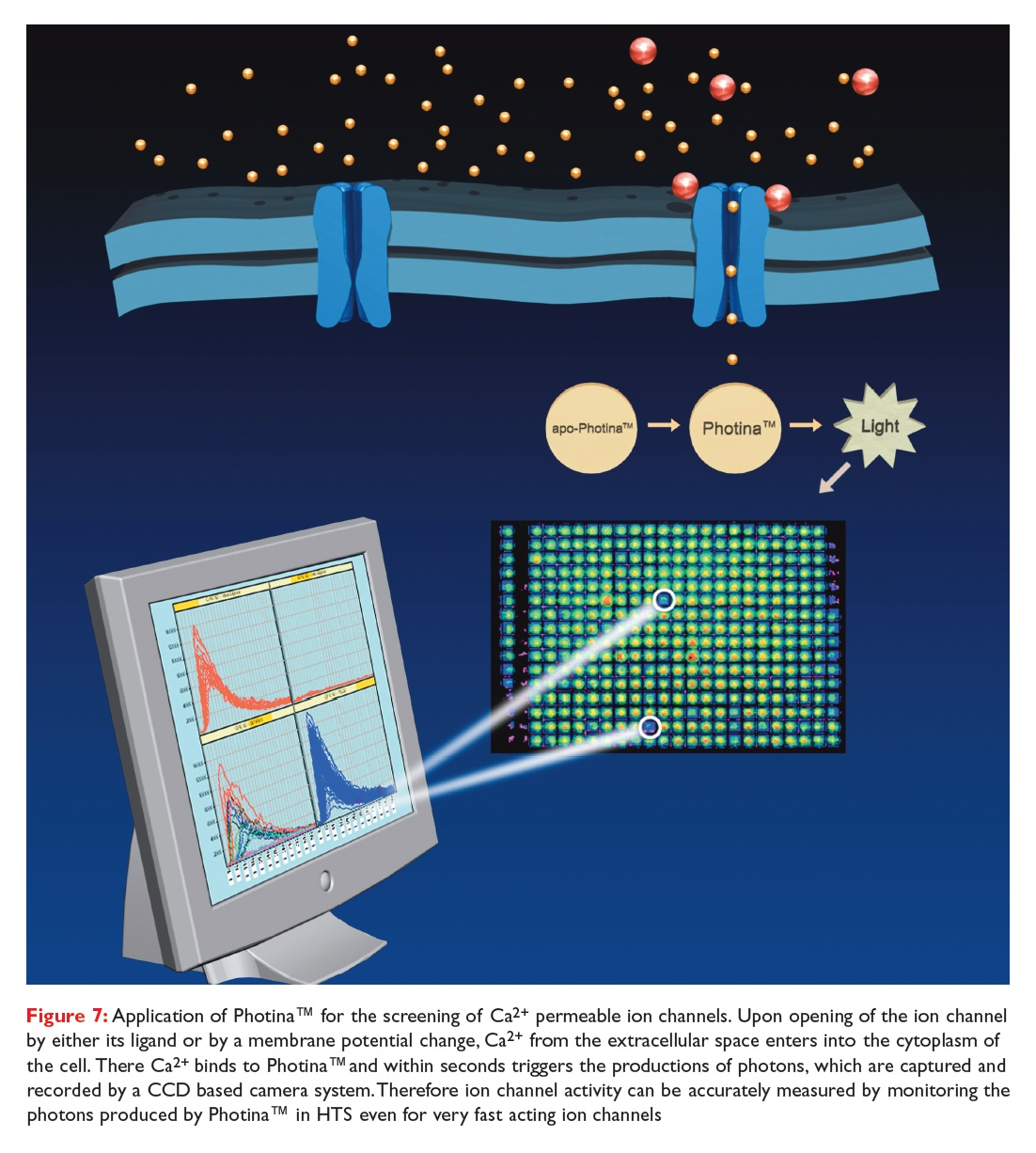 Figure 7 Application of Photina for the screening of Ca2+ permeable ion channels