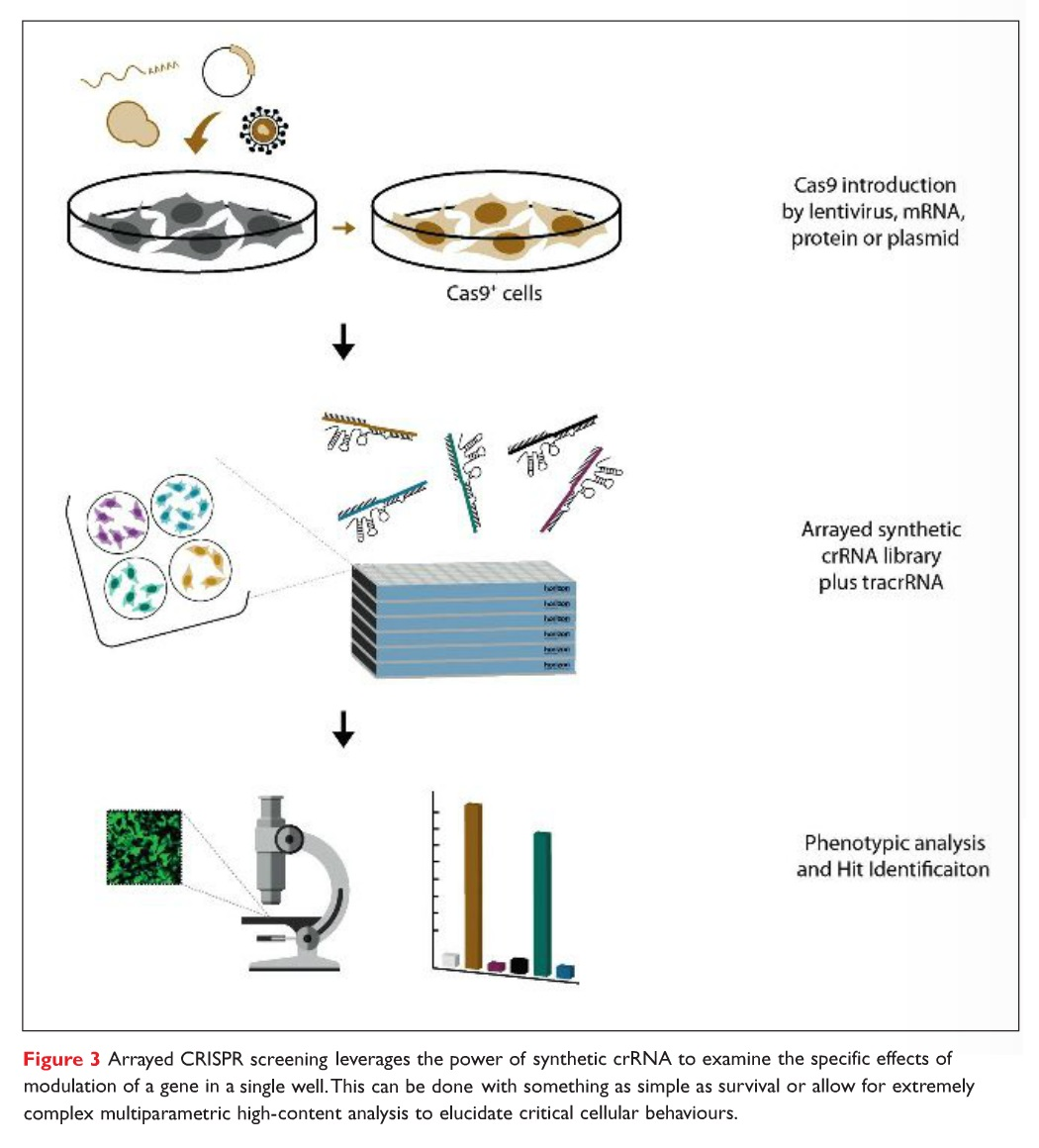 Figure 3 Arrayed CRISPR screening leverages the power of synthetic crRNA to examine the specific effects of modulation of a gene in a single well