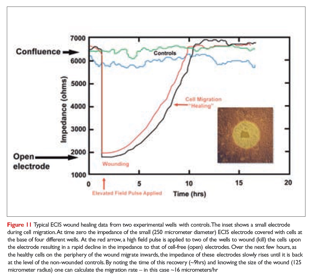 Figure 11 Typical ECIS wound healing data from two experimental wells with controls