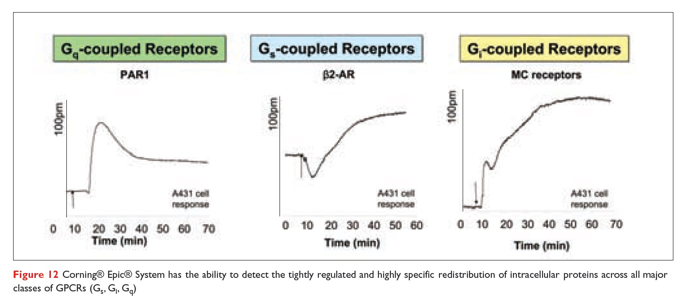 Figure 12 Corning Epic System has the ability to detect the tightly regulated and highly specific redistribution of intracellular proteins