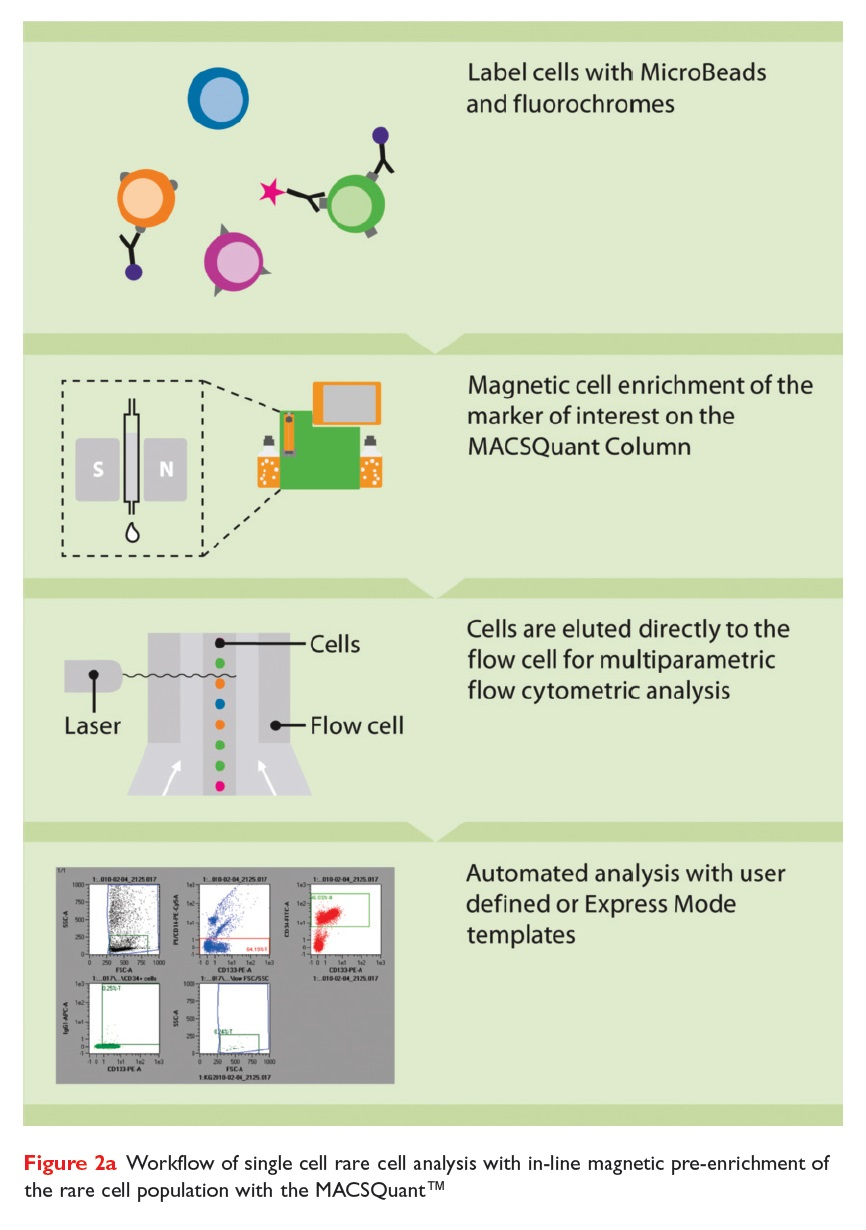 Figure 2a Workflow of single cell rare cell analysis with in-line magnetic pre-enrichment of the rare cell population with the MACSQuant