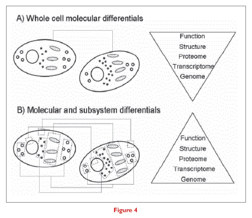 Figure 4 Whole cell molecular differentials and molecular and subsytem differentials
