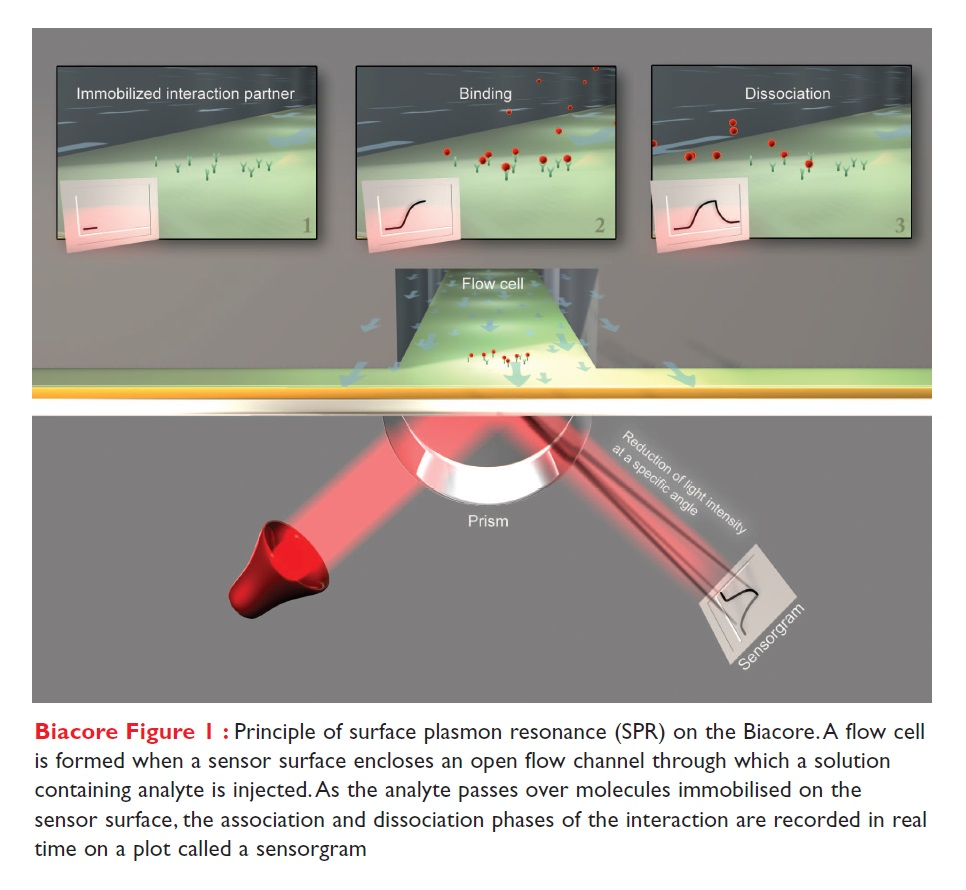 Image 1 Principle of surface plasmon resonance (SPR) on the Biacore