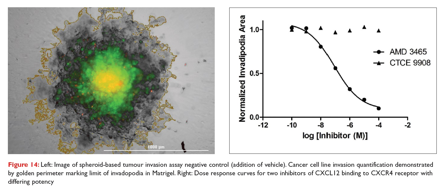 Figure 14 Image of spheroid-based tumour invasion assay negative control, and dose response curves for two inhibitors