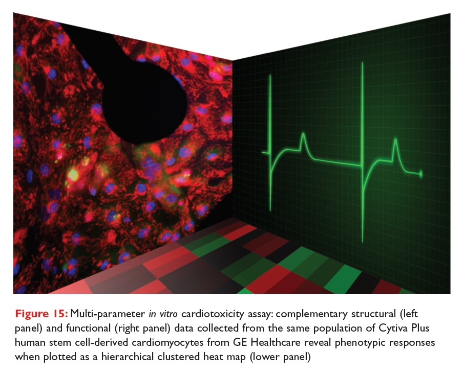 Figure 15 Multi-parameter in vitro cardiotoxicity assay
