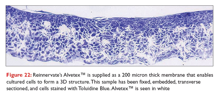 Figure 22 Reinnervate's Alvetex is supplied as a 200 micron thick membrane that enables cultured cells to form a 3D structure