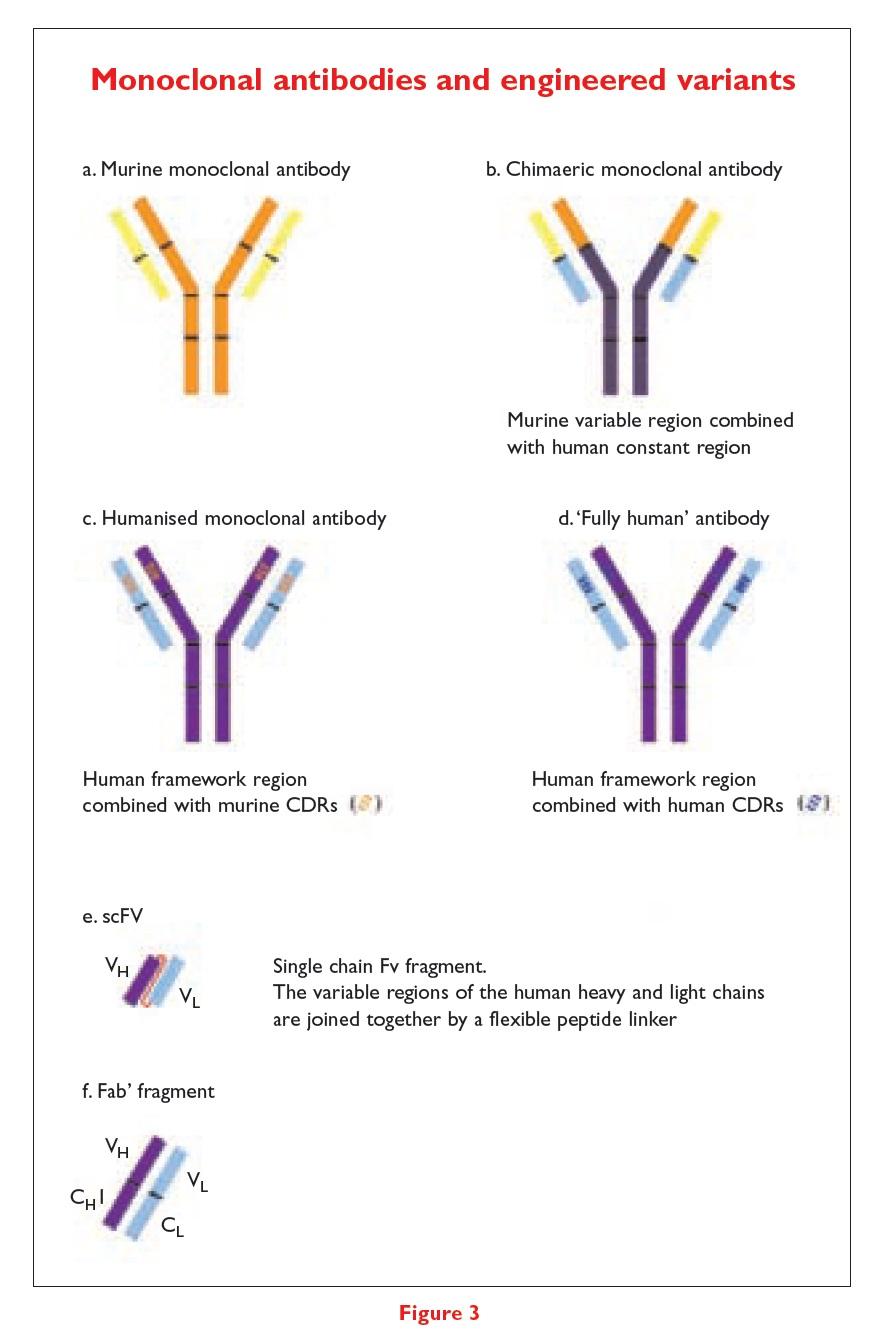 Figure 3 Monoclonal antibodies and engineered variants