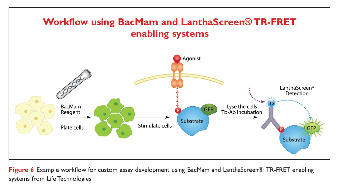 Figure 6 Example workflow for custom assay development using BacMam and LanthaScreen TR-FRET enabling systems from Life Technologies