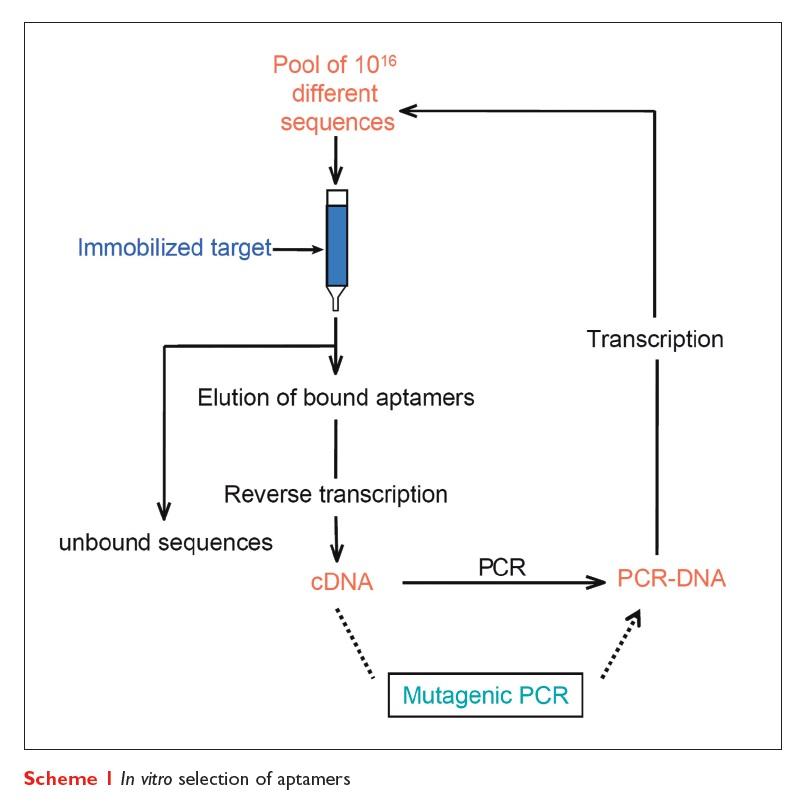 Scheme 1 In vitro selection of aptamers