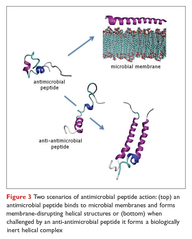 Figure 3 Two scenarios of antimicrobial peptide action