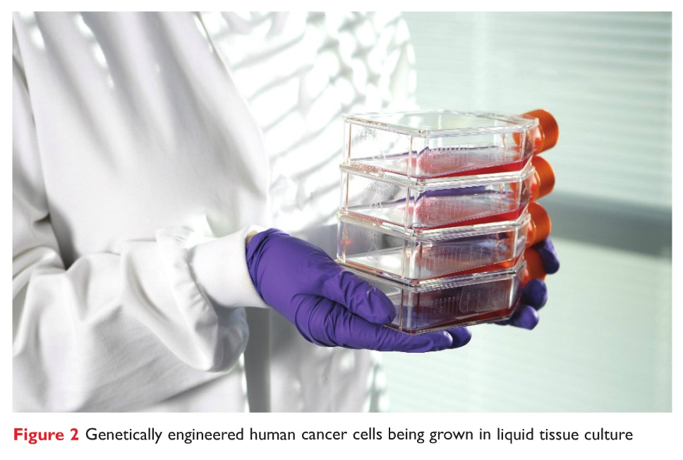 Figure 2 Genetically engineered human cancer cells being grown in liquid tissue culture