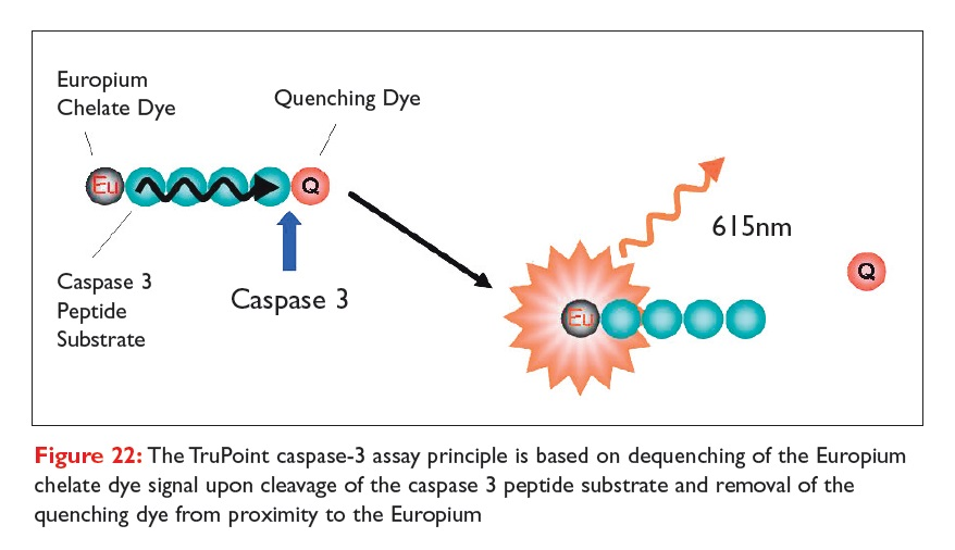 Figure 22 The TruPoint caspase-3 assay principle is based on dequenching of the Europium chelate dye signal