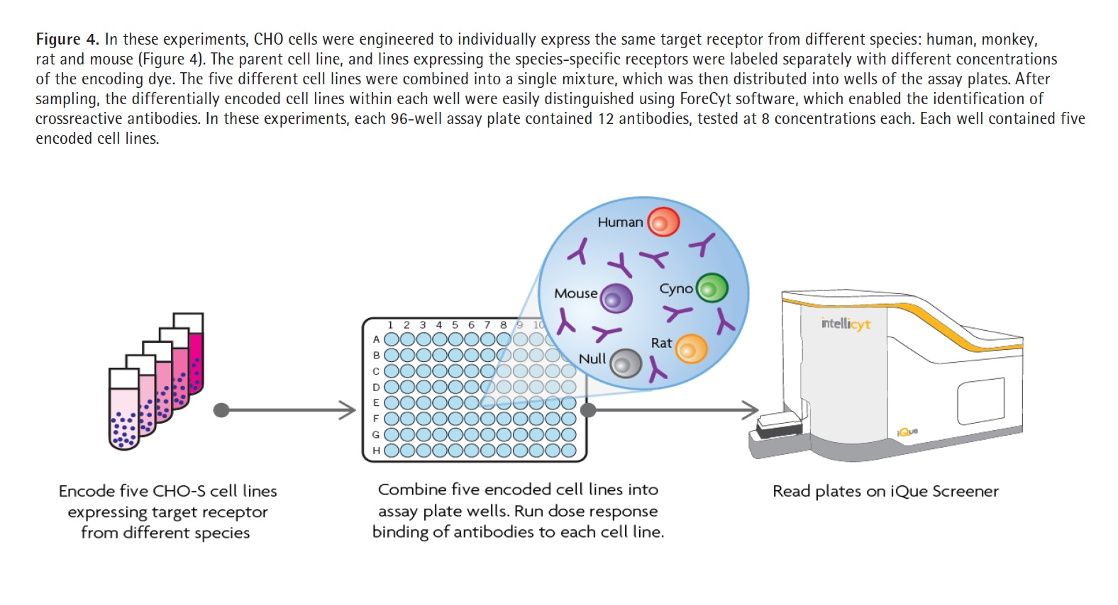 Figure 4 In these experiments, CHO cells were engineered to individually express the same target receptor from different species