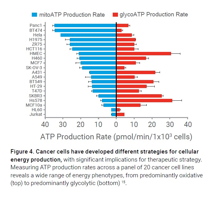 Figure 4 Cancer cells have developed different strategies for cellular energy production