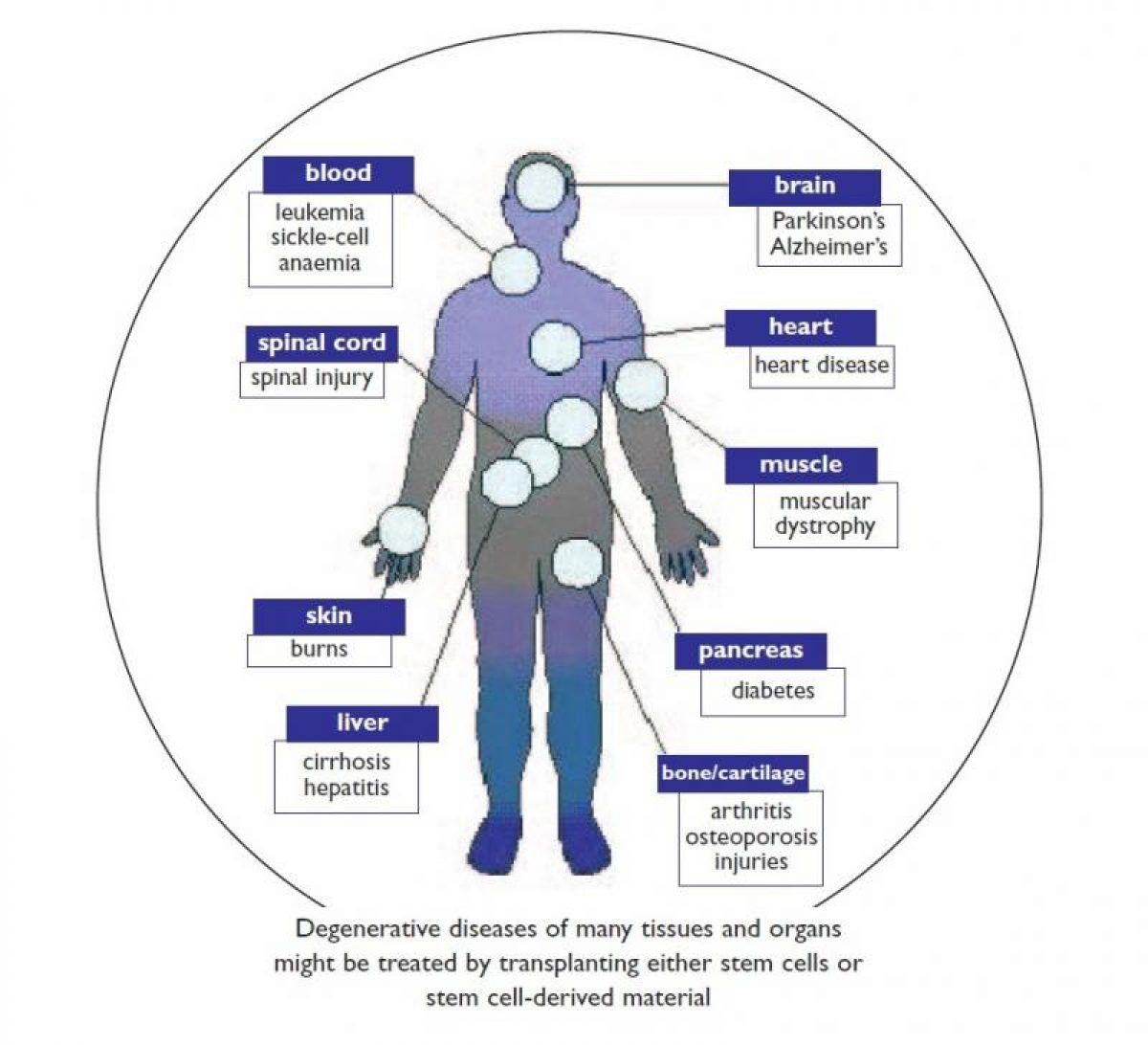 Regenerative Medicine Tips